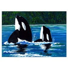 Two Orcas Poster