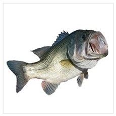 Bass Fisherman Poster