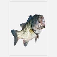 Bass Fisherman