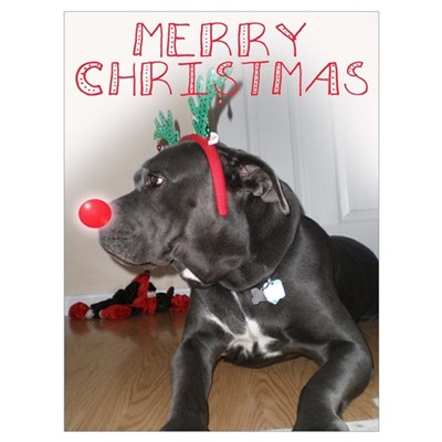 Santa Paws Canvas Art