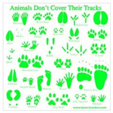 Green Tracks Poster