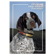 German Shorthair Pointer-2 Framed Print