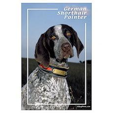 German Shorthair Pointer-2 Poster