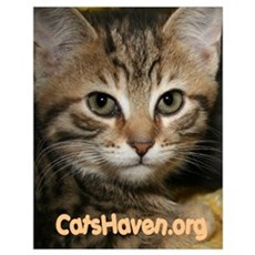 Cats Haven Rescue 31 Poster