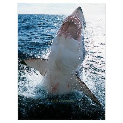 High Flying Sharks Poster