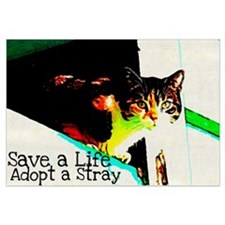 Adopt a Stray
