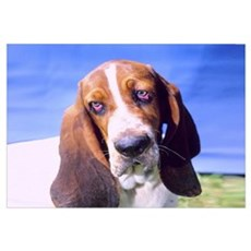 """Sad Bassethound - B1"" Framed Print"