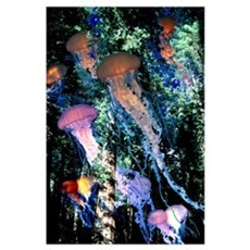 Jellyfish Forest Poster