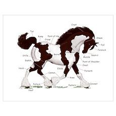 Black Tobiano Horse Anatomy Poster
