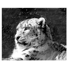 Snow Leopard 2 Canvas Art