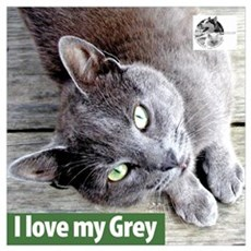 Grey Cat Canvas Art