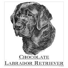 Chocolate Labrador Breed Poster