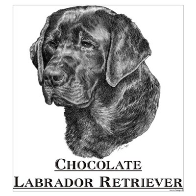 Chocolate Labrador Breed Poster