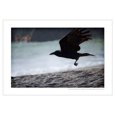 A Common Raven Over the Beach at Tennessee 14x10 Framed Print