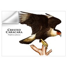 Crested Caracara Wall Decal
