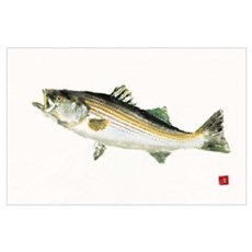 Striped Bass Gyotaku Poster