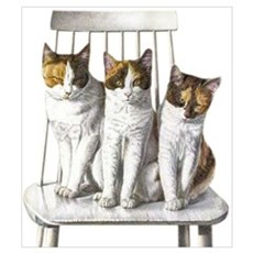 3 Calicos Canvas Art