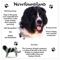 Newf 6 Poster