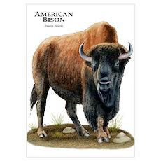 American Bison (Buffalo) Poster