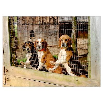 'Waiting to Run' Hunting Beagle Poster