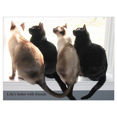 Bird Watching With Cat Friends Poster