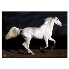 Sabino White Horse Poster