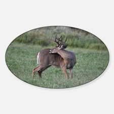 8 point Buck Decal