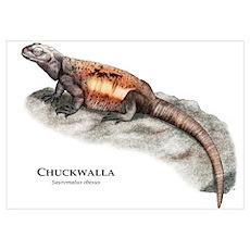Chuckwalla Poster