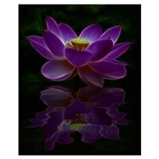 Moonlight Lotus Flower Framed Print