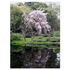 Cherry Blossoms Tree Poster