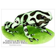 Green & Black Poison Dart Fro Poster