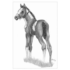 Paint Foal Poster