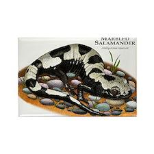 Marbled Salamander Rectangle Magnet