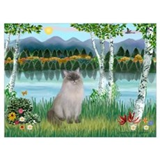 Birches / Ragdoll Canvas Art