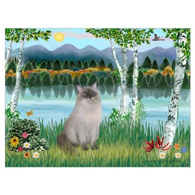 Birches / Ragdoll Framed Print