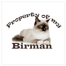 Property of My Birman Poster