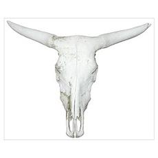 Bull Skull Poster