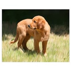 Little Retriever Puppy Poster