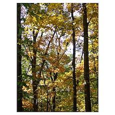 Germantown Trees Poster