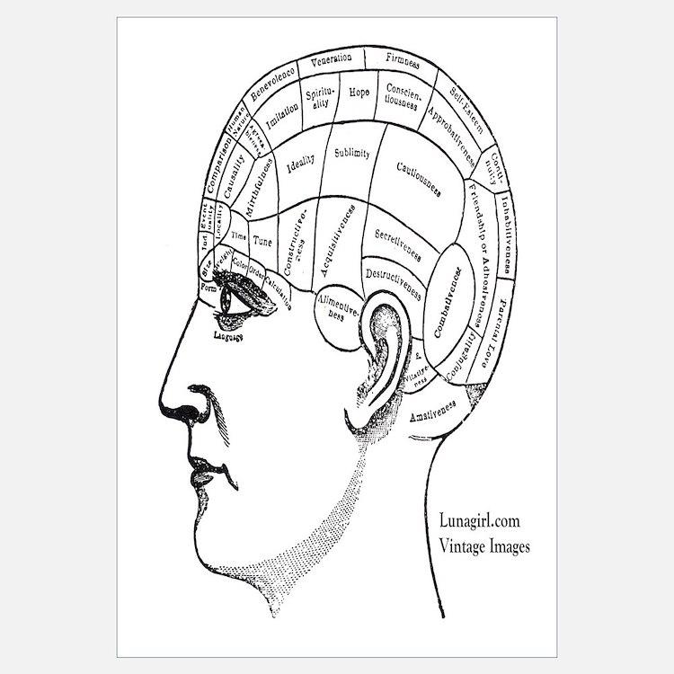 Cute Antique phrenology head Wall Art