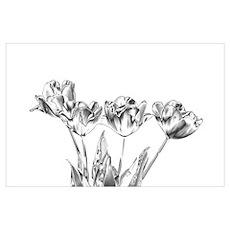 Chrome Tulip Poster