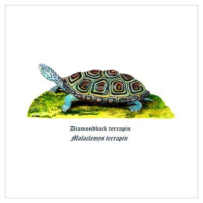 Diamondback Terrapin Poster
