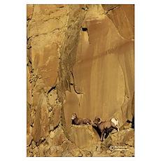 """""""Eagle's Nest"""" (bighorn) Poster"""
