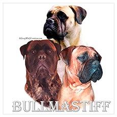 Bullmastiff 1 Poster