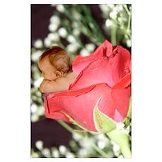 Rose Flower Baby Poster