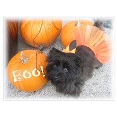 Bewitching Cairn Terrier Poster