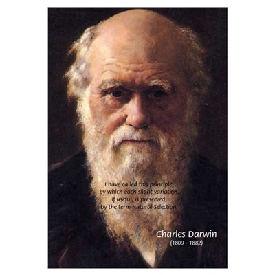 Charles Darwin: Evolution Framed Print