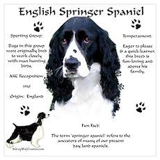 Springer 1 Poster