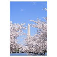 Unique Washington dc cherry blossom Wall Art