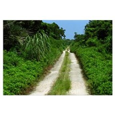 Taketomi Dirt Road Canvas Art